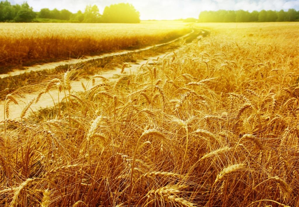 нас сельское хозяйство картинки высокого качества характеристики надгробий мраморной